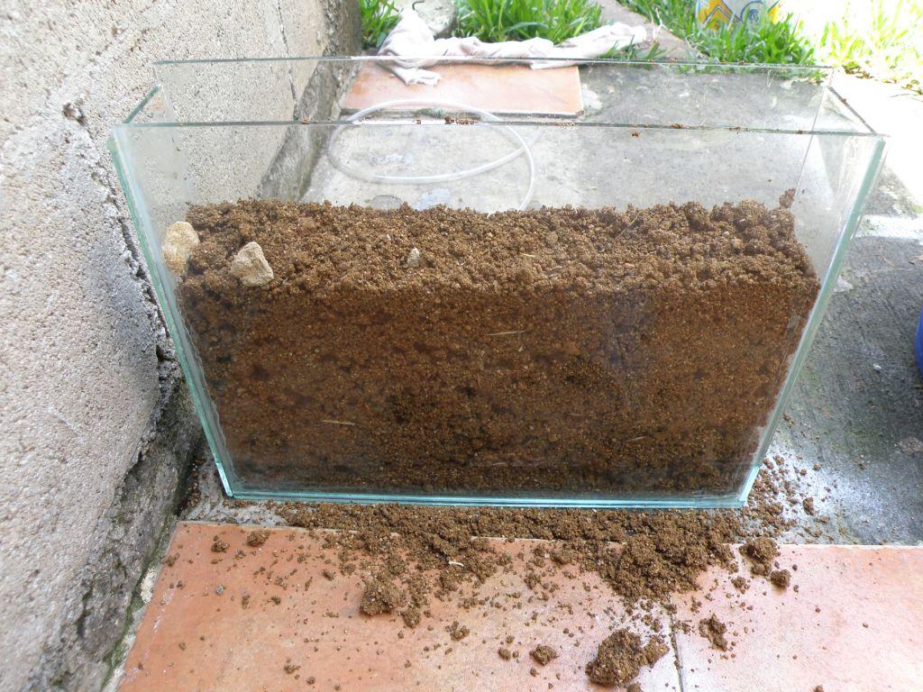Www lamarabunta org ver tema reina atta loca - Como construir un terrario ...