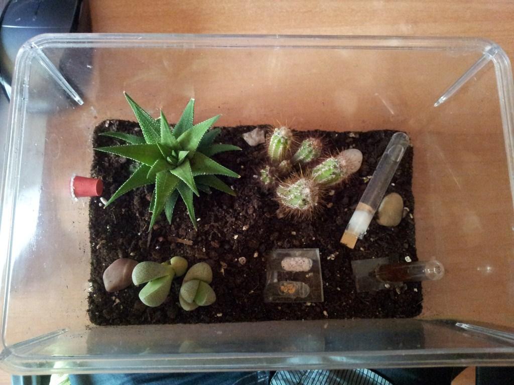 Www lamarabunta org ver tema caja de forrajeo con for Peceras en jardines
